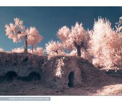 gethsemane by greyfin