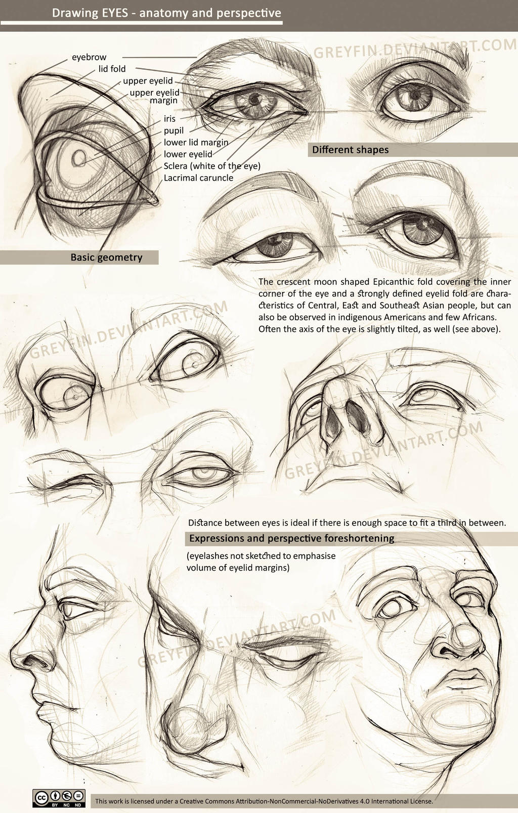Drawing eyes - anatomy and perspective by greyfin on DeviantArt