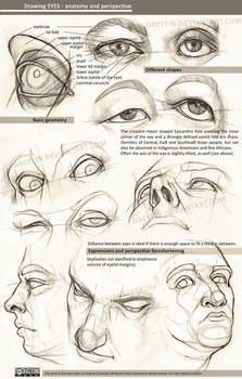 Drawing eyes - anatomy and perspective