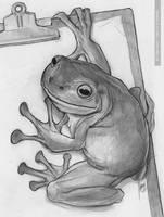 Froggie by greyfin