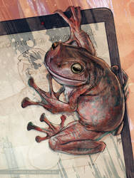 ceci n'est pas une grenouille by greyfin