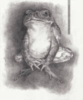Toad (pencil) by greyfin