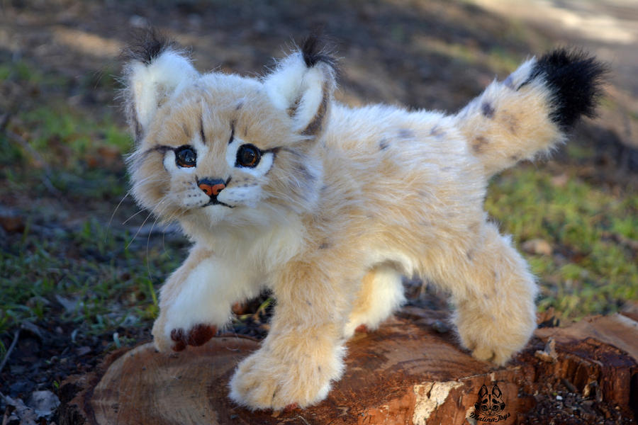 Poseable Toy Commission Bobcats Cub By Malinatoys On