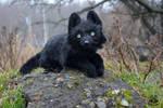 ETSY Commission black wolf.100 % handmade
