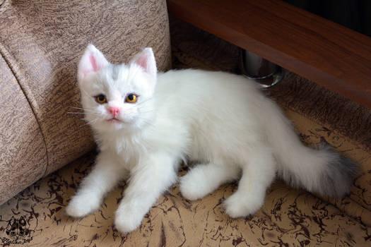 ETSY Commission White Cat