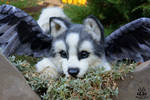 Poseable toy commission :Husky  puppy with wings
