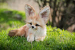 For Sale! Auction Handmade Poseable toy Fennec Fox