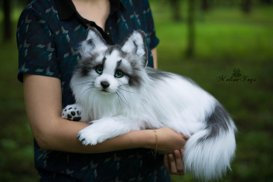 Related Keywords Amp Suggestions For Marble Fox