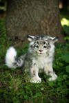 SOLD! Handmade Poseable toy Snow leopard cub
