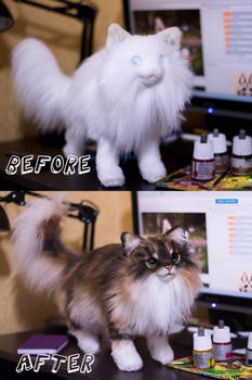 Before and after. Cat Commission