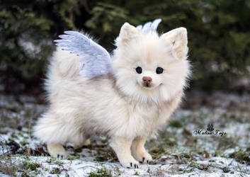 Poseable toy Commission white Pomeranian