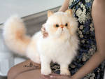 Handmade Poseable toy Commission fluffy cat