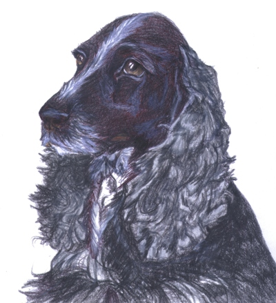 English Cocker WC Pencil by animal-artists