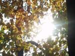 Golden Autumn Sunshine