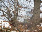 Almost a winter wonderland