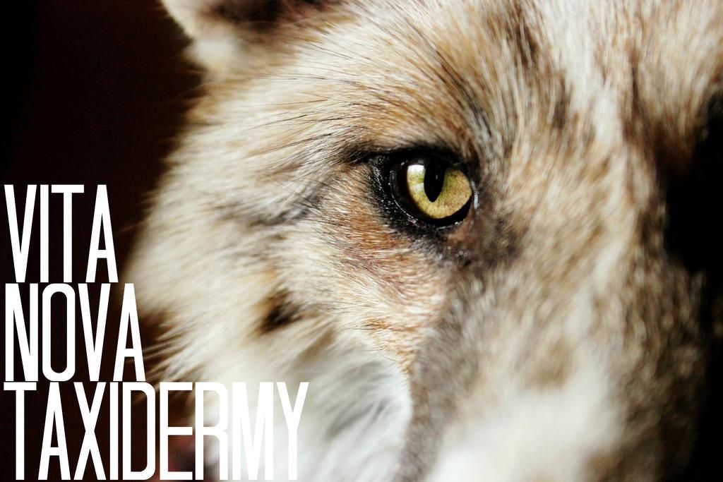 Vita Nova Taxidermy by InNaturesImage