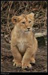 Posing Cub