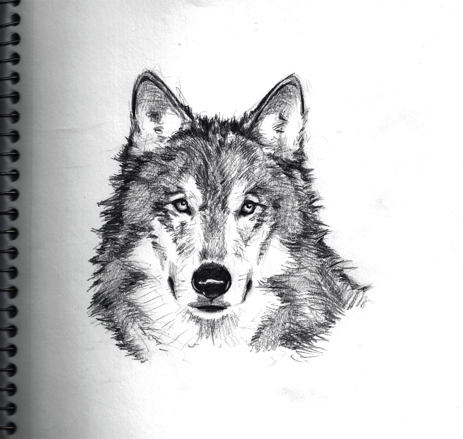 Wolf Sketch By ChevronLowery On DeviantArt