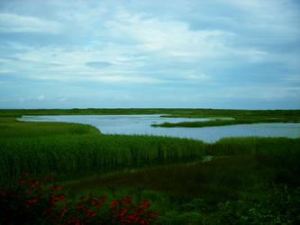 aran's fields by elyby