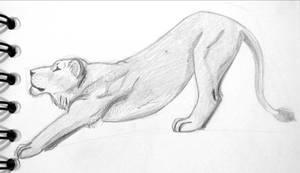 Lion 6 - Streching Lioness