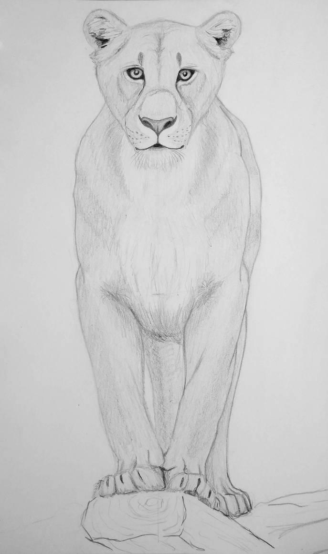 Lioness front by KiaraSLZ