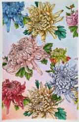 Adult coloring book - chrysanthemums