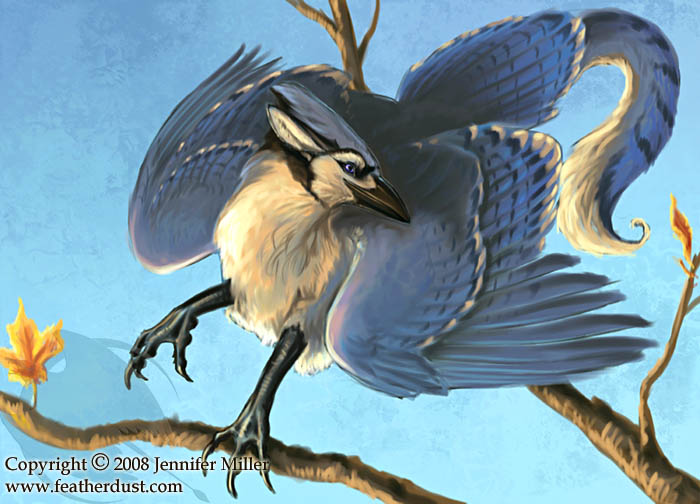 how to draw a blue jay video
