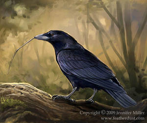 New Caledonian Crow by Nambroth