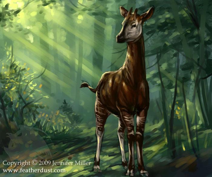 Okapi By Nambroth On Deviantart
