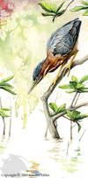 Green Heron Watercolor Study