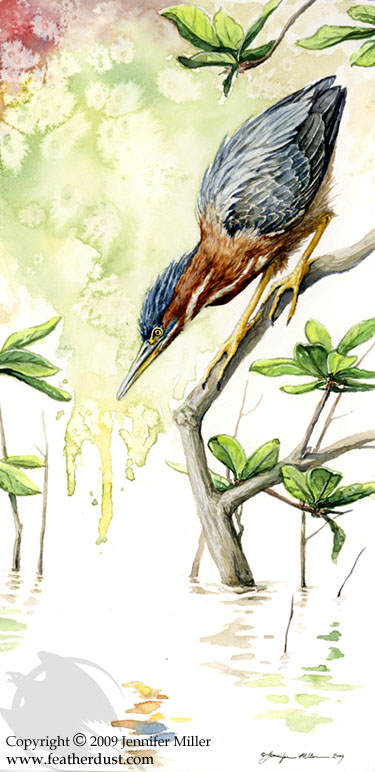 Green Heron Watercolor Study by Nambroth