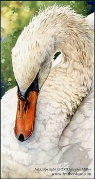 Swan Repose - Watercolor Study