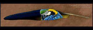 Preening Blue and Gold Macaw