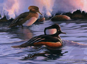 Amaranthine- Hooded Mergansers