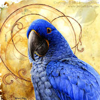A Special Kind of Blue - Hyacinth Macaw by Nambroth