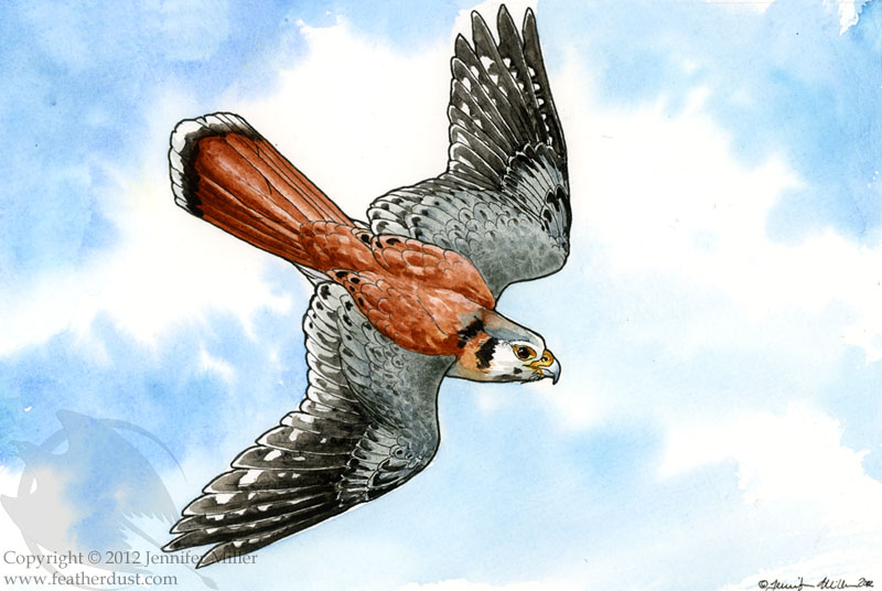 Diving Kestrel by Nambroth