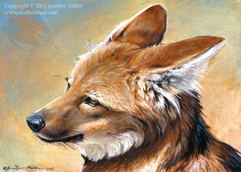 Maned Wolf Face