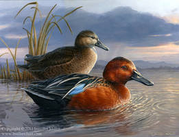 Evening Weather - Cinnamon Teal by Nambroth