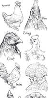 Chicken Sketches
