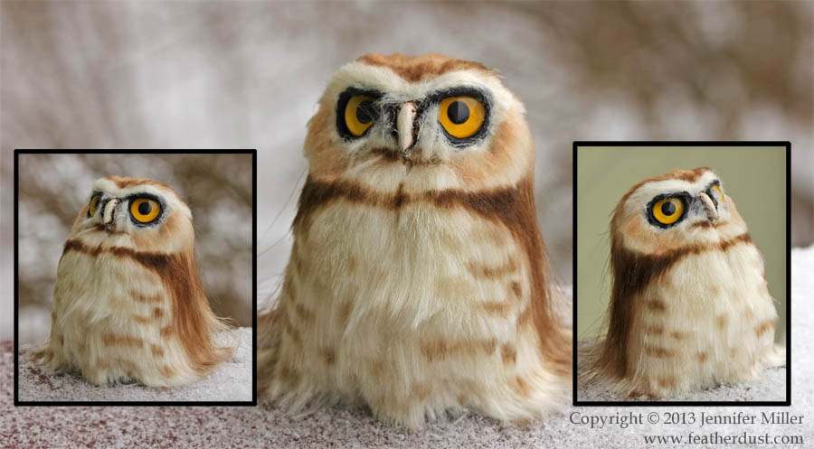 Fluffygrump Burrowing Owl by Nambroth