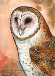 Barn Owl Miniture Painting