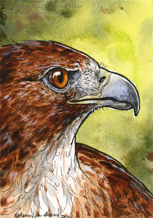 Red-Tailed Hawk Miniture Painting by Nambroth