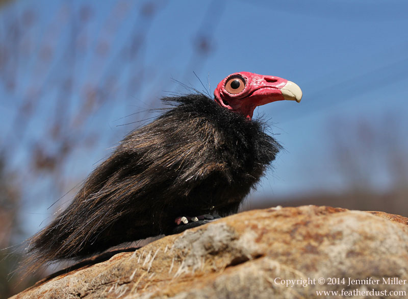 Quinn, the Turkey Vulture by Nambroth