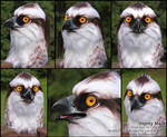 Lett, the Osprey (Mask)