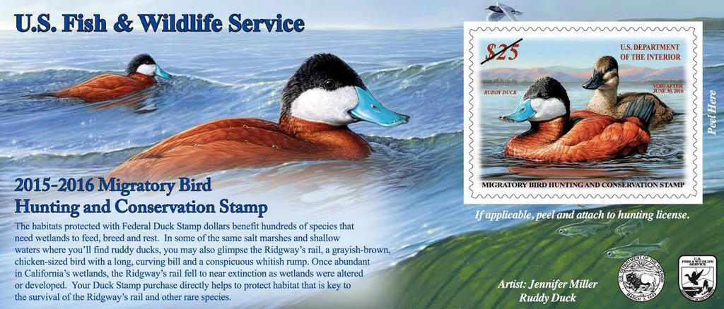 2015-16 Federal Duck Stamp (Adhesive Issue)
