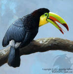 Toucan Sunbath - Keel-Billed Toucan
