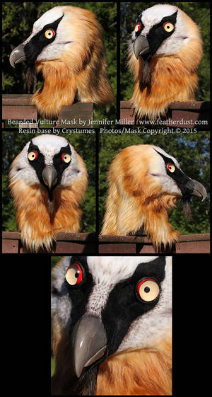 Kleiveer the Bearded Vulture Mask