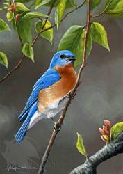 Little Bluebird by Nambroth