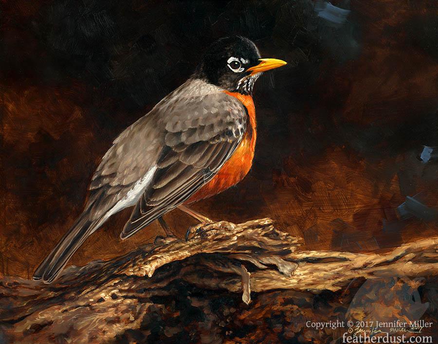 Understory Robin