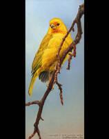 Saffron Cascade